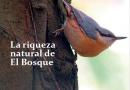 Revista El Bosque Nº 104 Noviembre 2018
