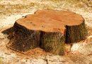 ¿Qué criterios se siguen para la tala de árboles en El Bosque?